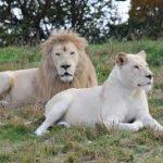 野生の王国東北サファリパークの見どころとアクセス