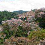 吉野山の桜を見に行こう