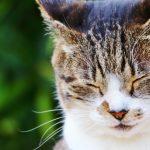猫飼いなのに、アレルギーに! それでも猫と一緒にいたいときにすべきこと