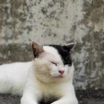 経験者が語る…保護野良猫を飼うときの注意とうまく暮らすポイント