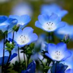 おすすめは春と秋!ひたち海浜公園が誇る絶景の花や自然とは!?