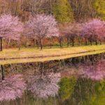 絶景ひとり占め?今週末狙いたい桜の名所関東の穴場スポット10選
