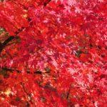 秋だ!紅葉狩りだ!関西の子連れにお勧めしたい紅葉狩りプラン