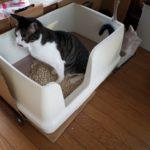 猫がトイレを覚えてくれない…もう失敗させない!猫のトイレしつけ法